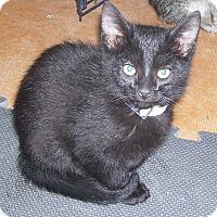 Adopt A Pet :: Salvadore - Colorado Springs, CO