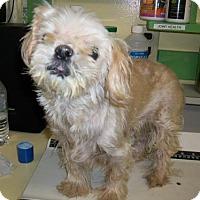 Adopt A Pet :: Jet - Groton, MA