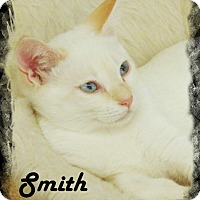 Siamese Kitten for adoption in Anaheim Hills, California - Smith
