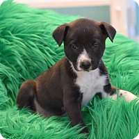 Adopt A Pet :: Packer - Groton, MA