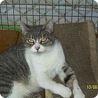 Adopt A Pet :: Charity - Mexia, TX