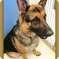 Adopt A Pet :: Buddy Boy - Divide, CO