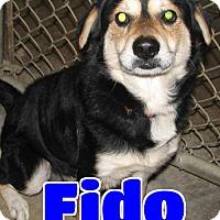 Adopt A Pet :: #246 Fido - Lawrenceburg, KY