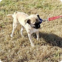 Adopt A Pet :: Angel - Halifax, NC