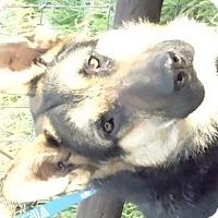 Adopt A Pet :: Roxy hart - Vacaville, CA