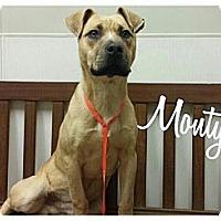 Adopt A Pet :: Monty - Park Ridge, NJ