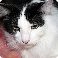 Adopt A Pet :: Geronimo - Kalamazoo, MI
