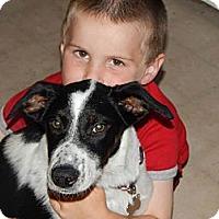 Adopt A Pet :: Charlee! - Hancock, MI