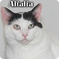 Adopt A Pet :: Alfalfa - River Edge, NJ