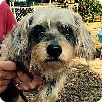 Adopt A Pet :: BJ - Orlando, FL