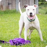 Adopt A Pet :: Calum - Houston, TX