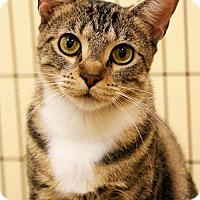 Adopt A Pet :: Mercedes - Overland Park, KS