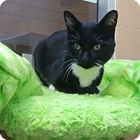 Adopt A Pet :: Lord Snuggles - Chula Vista, CA