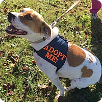 Adopt A Pet :: Carolina (MRHSF) - Allentown, PA
