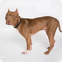 Adopt A Pet :: Ramses - Greensboro, NC