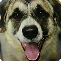 Adopt A Pet :: Moe - Ascutney, VT