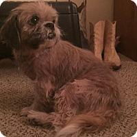 Adopt A Pet :: Emma - LEXINGTON, KY