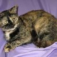 Adopt A Pet :: Tansy - Powell, OH