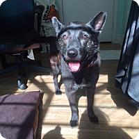 Adopt A Pet :: Rosemary - San Francisco, CA