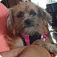 Adopt A Pet :: Rachel - Ft. Lauderdale, FL