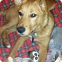 Adopt A Pet :: Chamberlain - Enfield, CT
