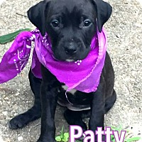 Adopt A Pet :: Patty - Groton, MA