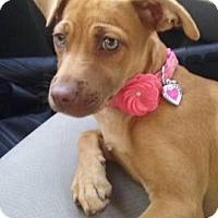 Adopt A Pet :: LILLY - Fort Pierce, FL