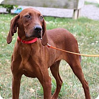 Adopt A Pet :: Artemis - Elyria, OH