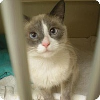 Adopt A Pet :: Squeegee - Fort Collins, CO