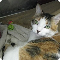 Adopt A Pet :: Lola - Upland, CA