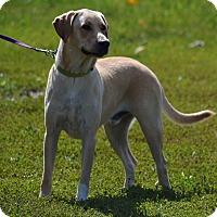 Adopt A Pet :: Marley - Lebanon, MO