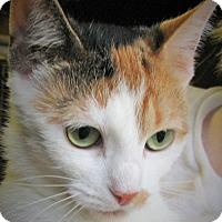 Adopt A Pet :: Penelope - Bedford, VA