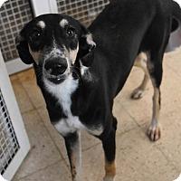 Adopt A Pet :: JENEVA - Wonder Lake, IL