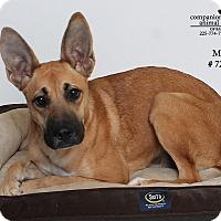 Adopt A Pet :: Mitzi - Baton Rouge, LA