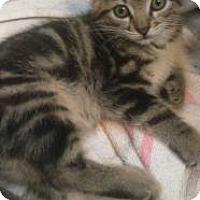Adopt A Pet :: Lily - Greensburg, PA