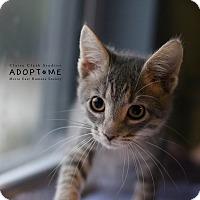 Adopt A Pet :: Maggie - Edwardsville, IL