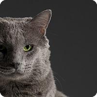 Adopt A Pet :: Chip-a-munk - Los Angeles, CA