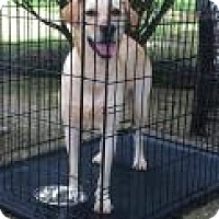 Adopt A Pet :: Luna - Covington, LA