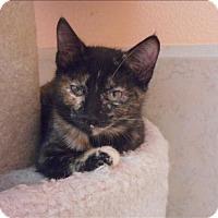 Adopt A Pet :: Addie - Osage Beach, MO