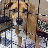 Adopt A Pet :: Buster - Jamestown, TN