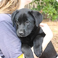 Adopt A Pet :: Maddie - Auburn, MA