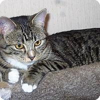 Adopt A Pet :: Hermeownie - Vancouver, BC