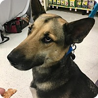 Adopt A Pet :: Frankie - North Las Vegas, NV