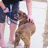 Adopt A Pet :: BELLA - Boise, ID