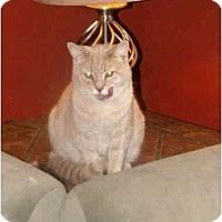 Adopt A Pet :: Arthur - Xenia, OH