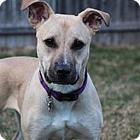 Adopt A Pet :: Tina Tanner - Rockaway, NJ
