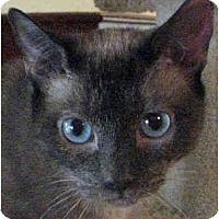 Adopt A Pet :: Ashlyn - Davis, CA