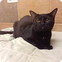 Adopt A Pet :: Coraline - Scottsdale, AZ