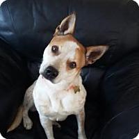 Adopt A Pet :: Shelby - Lebanon, ME
