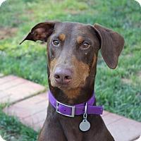 Adopt A Pet :: Zeke--pending - New Richmond, OH